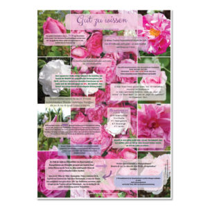 "Poster ""Rosen"" Format A2 - Vivere Aromapflege - AromaMama"