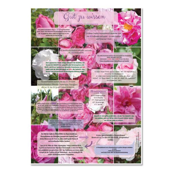"Poster ""Rosen"" Format A2 - Vivere Aromapflege - AromaMama"